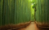 Bamboo+Business+Growth