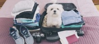 Dog sitting in the suitcase 000092366339 Large min